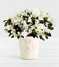 Sympathy White Azalea with Angel