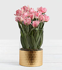 Luxury Pink Foxtrot Tulips