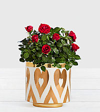Potted Red Roses in Gold Heart Planter