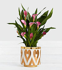 Potted Pink Calla Lily in Gold Heart Planter