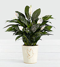 Lush Tropical Peace Lily in Dove Cross Ceramic