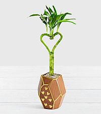 Heart Bamboo in Heart Gem Planter