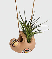 Hanging Sloth Air Plant