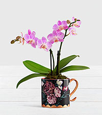 Pink Mini Orchid in Floral Mug