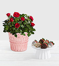 Potted Red Roses with 6 Gourmet Dipped Strawberries