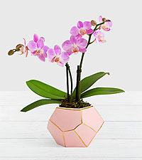 Pink Mini Orchid in Pink & Gold Gem