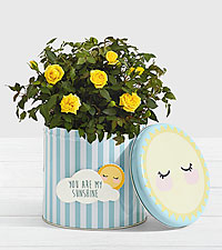 Potted Yellow Roses in Sunshine Tin with Magnet