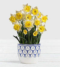 Daffodil Attraction Bulb Garden in Delft Ceramic Planter