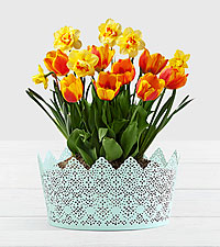 Sweet Citrus Bulb Garden in Mint Tin