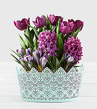 Fragrant Purple Bulb Garden in Mint Tin