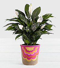 Lush Tropical Peace Lily in Moroccan Fan Basket