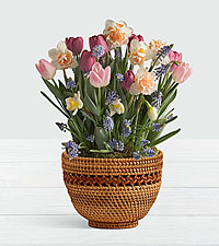 New Beginnings Bulb Garden in Woven Lace Basket
