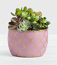Desert Jewel Succulent Garden in Lilac Scalloped Bowl