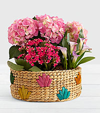 Pink Flowering Market Garden in Colorful Basket