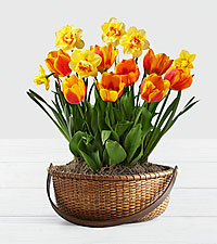 Sweet Citrus Bulb Garden in Basket with Handle