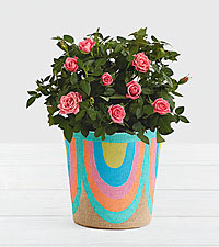 Pink Potted Roses in Rainbow Basket