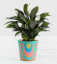 Lush Tropical Peace Lily in Rainbow Basket