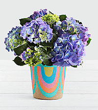 Potted Blue Hydrangea in Rainbow Basket