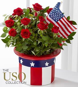 American Pride Mini Rose