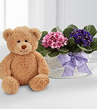 Violet Views Blooming Basket with Bear - BETTER