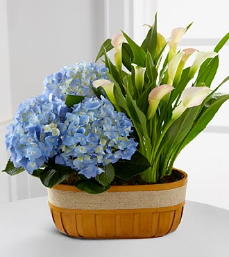 Spring Skies Hydrangea & Calla Lily Duo