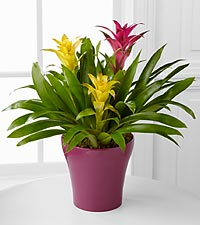 Tropical Traditions Bromeliad Garden