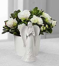 Light the Way Azalea Angel Planter