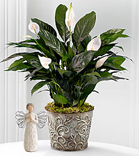 Prayers for Peace Lily Plant - BEST