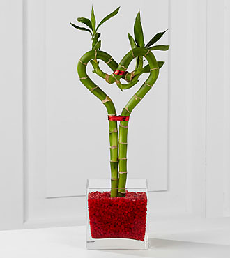 Be Still My Heart Lucky Bamboo - Good