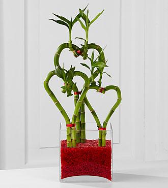 Be Still My Heart Bamboo - Best