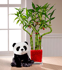 Heart to Heart Valentine 's Day Bamboo & Panda Bear