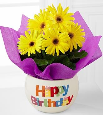 Happy Birthday Brights Gerbera Daisy Plant