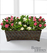 The FTD ® Blooming Impressions Windowbox by Better Homes and Gardens ®