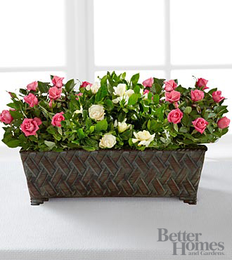 The FTD&reg; Blooming Impressions Windowbox by Better Homes and Gardens&reg;