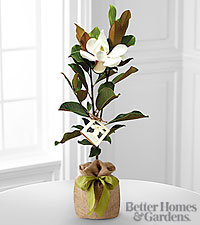 The FTD ® Southern Sensibilities Magnolia Tree by Better Homes and Gardens ®