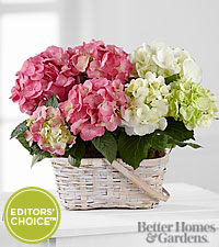 The FTD® Hydrangea Hopes Plant Duo in Better Homes and Gardens® magazine to benefit CARE
