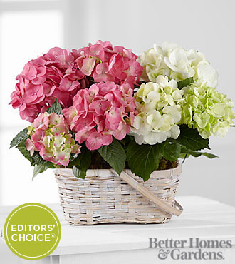 The FTD&reg; Hydrangea Hopes Plant Duo in Better Homes and Gardens&reg; magazine to benefit CARE