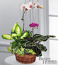 The FTD&reg; Spring Inspirations Mother's Day Dish Garden by Better Homes and Gardens&reg;
