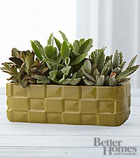 The FTD ® Green is the Thing Kalanchoe Succulent Garden by Better Homes and Gardens ®