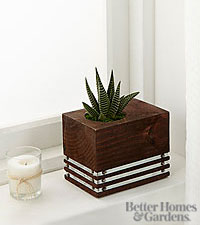 The FTD ® Sophisticated Statements Succulent Plant by Better Homes and Gardens ®