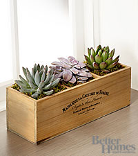 The FTD ® Tray Bien Succulent Windowbox by Better Homes and Gardens ®