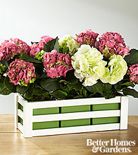 The FTD ® Picture Perfect Hydrangea Windowbox by Better Homes and Gardens ®