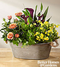 The FTD ®Autumn Moods Blooming Dish Garden by Better Homes and Gardens ®