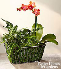 The FTD ® Harvest Style Plant Duo by Better Homes and Gardens ®
