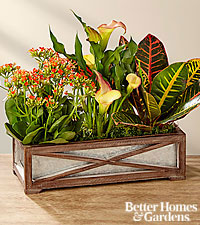 The FTD ® Fall Focus Dish Garden by Better Homes and Gardens ®