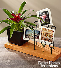 The FTD ® Love Your Life Bromeliad Plant with Messenger Board by Better Homes and Gardens ®