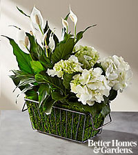 The FTD ® Clean & Bright Blooming Plant Duo by Better Homes and Gardens ®