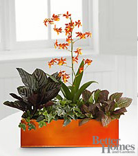 The FTD ® Vibrant Beauty Windowbox by Better Homes and Gardens ®
