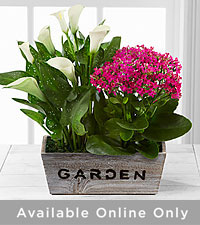 The FTD ® Sunlit Simplicity Dishgarden by Better Homes and Gardens ® - Good
