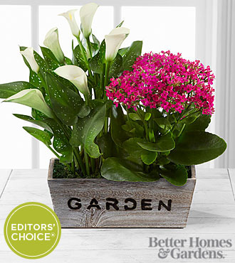 The FTD® Sunlit Simplicity Dishgarden by Better Homes and Gardens® - Good